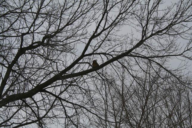 Runt in tree - closeup